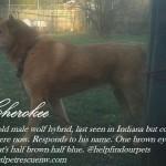cherokee post