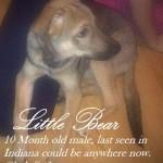 little bear post 2