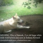 nanook post3