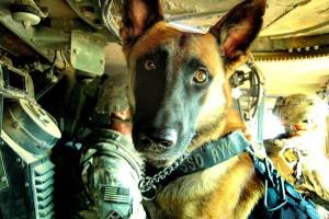 6.5.15-New-Bill-Would-Retire-Military-Dogs-With-Their-Handlers1