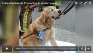 guide dog save owner